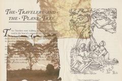 plane-tree