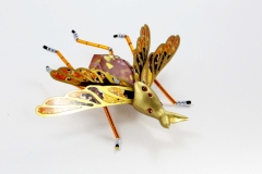 insecta-002