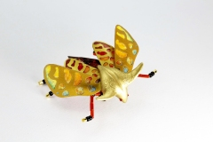 insecta-004