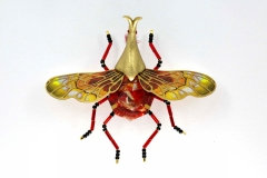 insecta-007