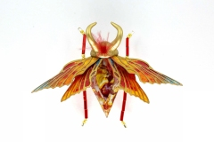 insecta-011