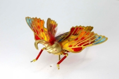 insecta-012