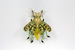 insecta-015