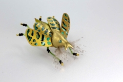 insecta-016