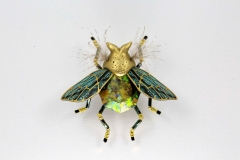 insecta-017