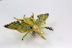 insecta-020